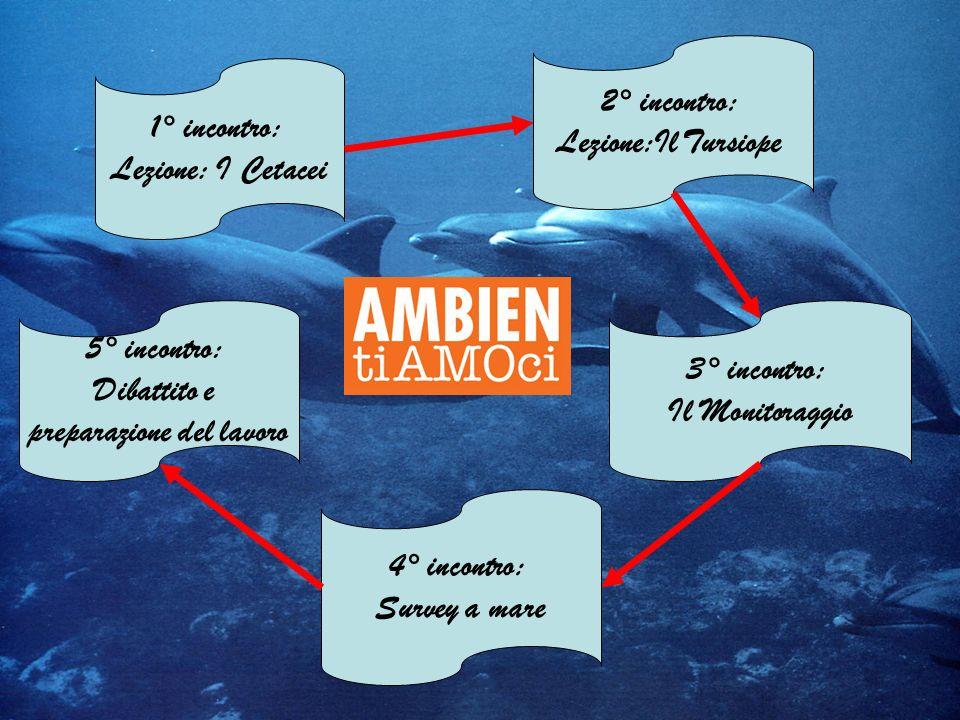 1° incontro: Lezione: I Cetacei 2° incontro: Lezione:Il Tursiope 3° incontro: Il Monitoraggio 4° incontro: Survey a mare 5° incontro: Dibattito e prep