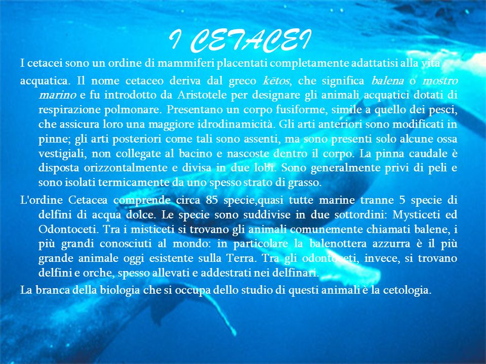 I CETACEI I cetacei sono un ordine di mammiferi placentati completamente adattatisi alla vita acquatica. Il nome cetaceo deriva dal greco kētos, che s