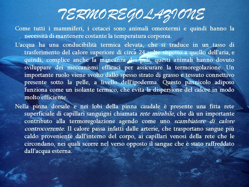 TERMOREGOLAZIONE Come tutti i mammiferi, i cetacei sono animali omeotermi e quindi hanno la necessità di mantenere costante la temperatura corporea. L