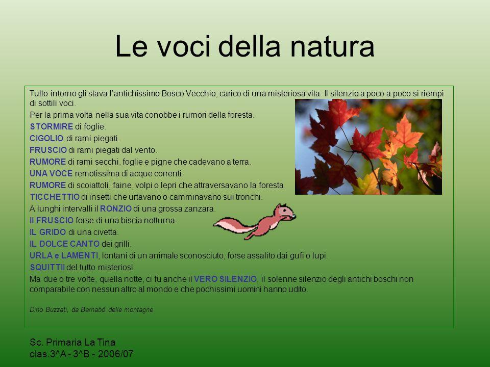 Sc. Primaria La Tina clas.3^A - 3^B - 2006/07 Il nostro bosco…dopo