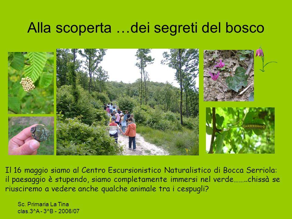 Sc.Primaria La Tina clas.3^A - 3^B - 2006/07 Insieme nel bosco….