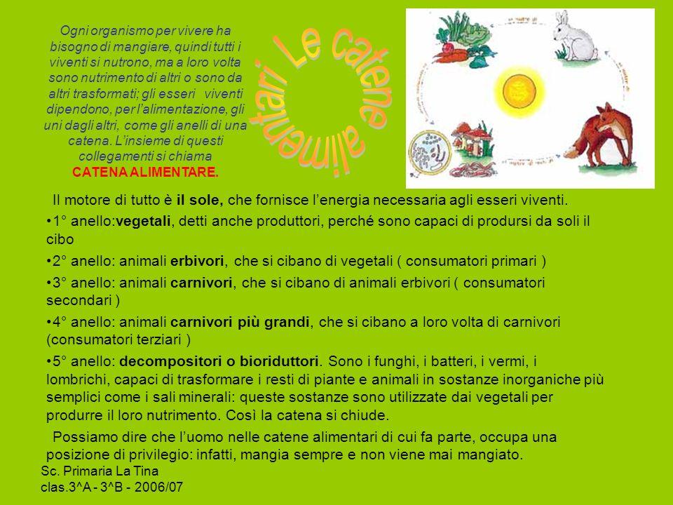Sc. Primaria La Tina clas.3^A - 3^B - 2006/07 Scopri il messaggio