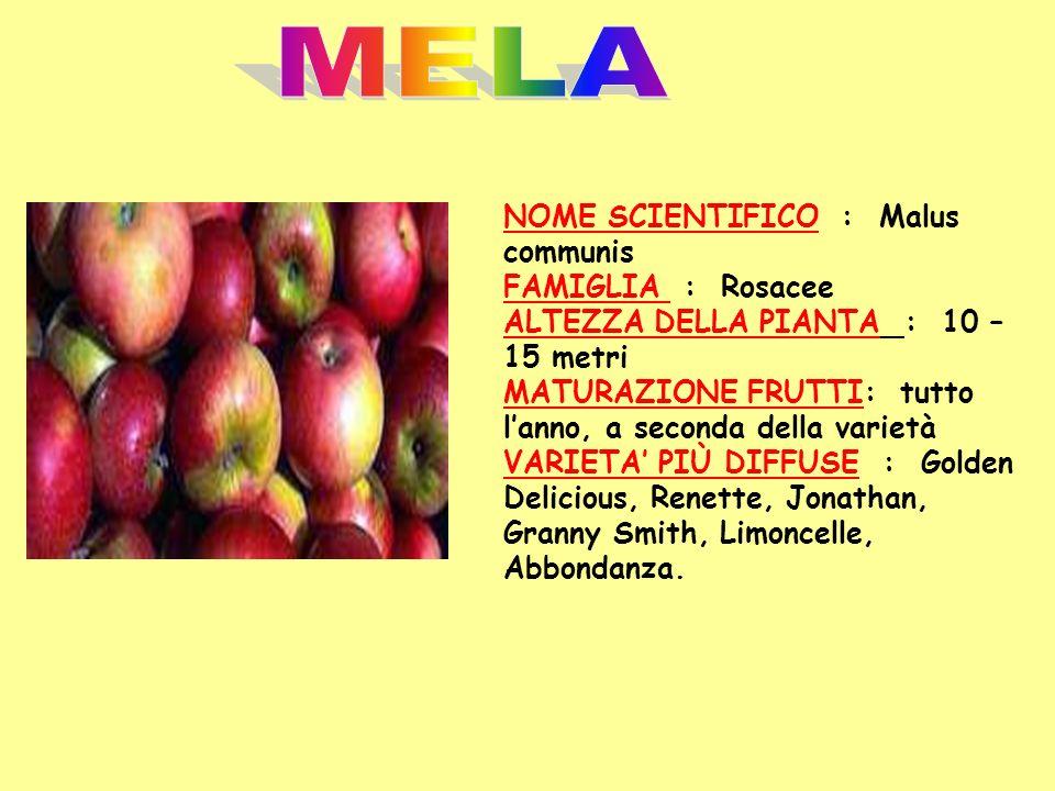 NOME SCIENTIFICO : Malus communis FAMIGLIA : Rosacee ALTEZZA DELLA PIANTA : 10 – 15 metri MATURAZIONE FRUTTI: tutto lanno, a seconda della varietà VAR