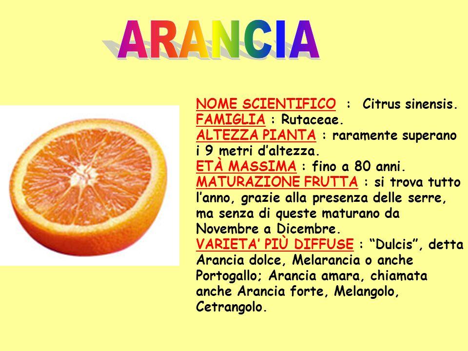 NOME SCIENTIFICO : Citrus sinensis. FAMIGLIA : Rutaceae. ALTEZZA PIANTA : raramente superano i 9 metri daltezza. ETÀ MASSIMA : fino a 80 anni. MATURAZ