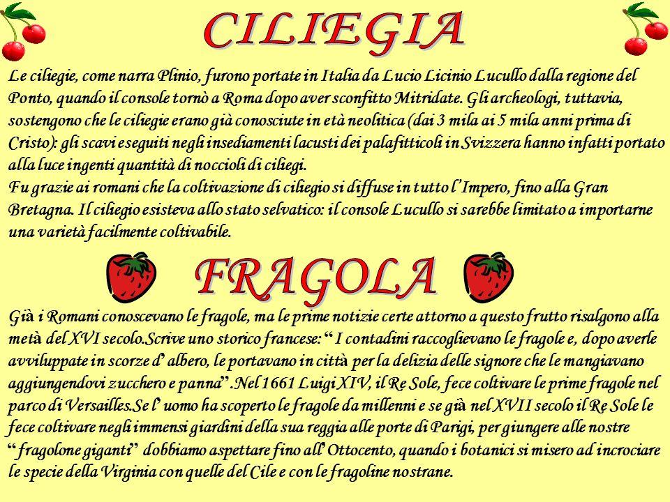 Le ciliegie, come narra Plinio, furono portate in Italia da Lucio Licinio Lucullo dalla regione del Ponto, quando il console tornò a Roma dopo aver sc