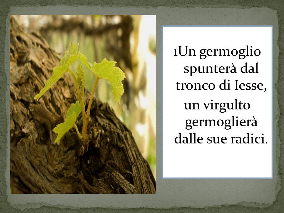 1Un germoglio spunterà dal tronco di Iesse, un virgulto germoglierà dalle sue radici.