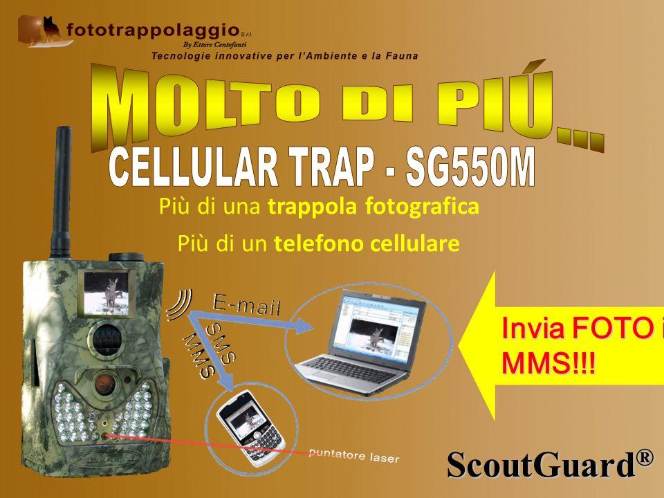 ScoutGuard ® Invia FOTO in MMS!!! Più di una trappola fotografica Più di un telefono cellulare