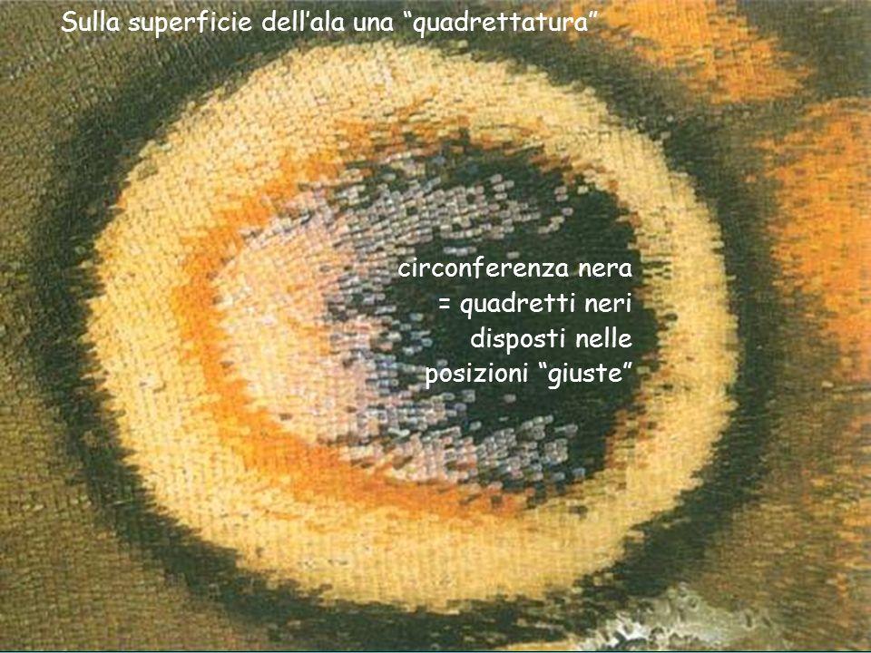 Sulla superficie dellala una quadrettatura circonferenza nera = quadretti neri disposti nelle posizioni giuste