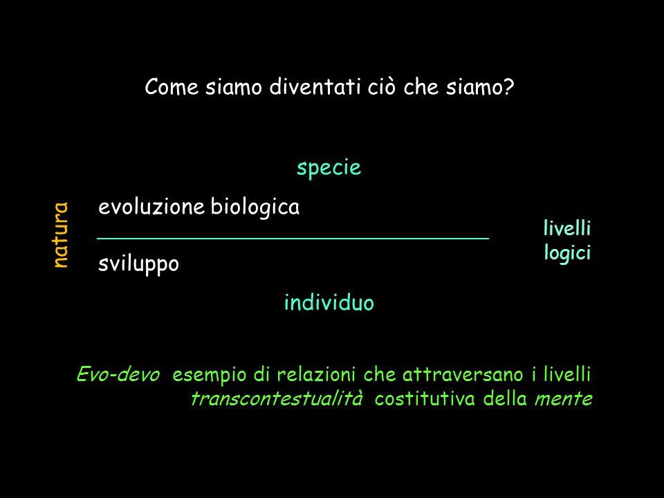 Come siamo diventati ciò che siamo? specie evoluzione biologica sviluppo individuo natura livelli logici Evo-devo esempio di relazioni che attraversan