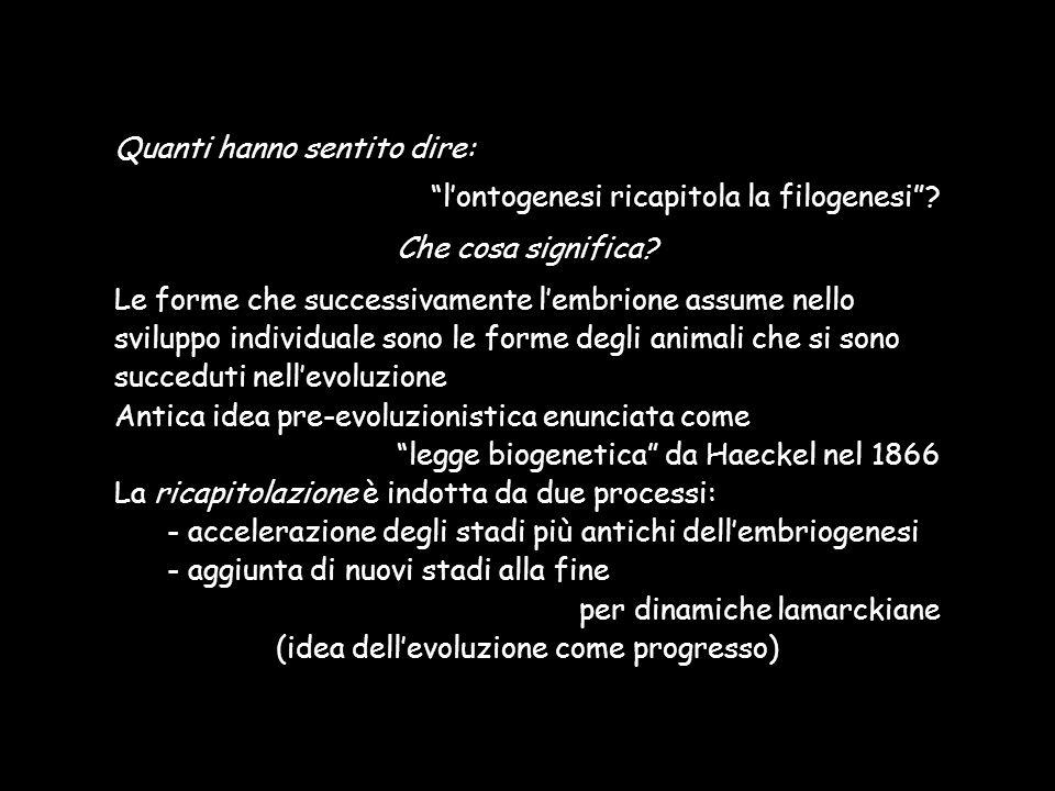 Quanti hanno sentito dire: lontogenesi ricapitola la filogenesi? Che cosa significa? Le forme che successivamente lembrione assume nello sviluppo indi
