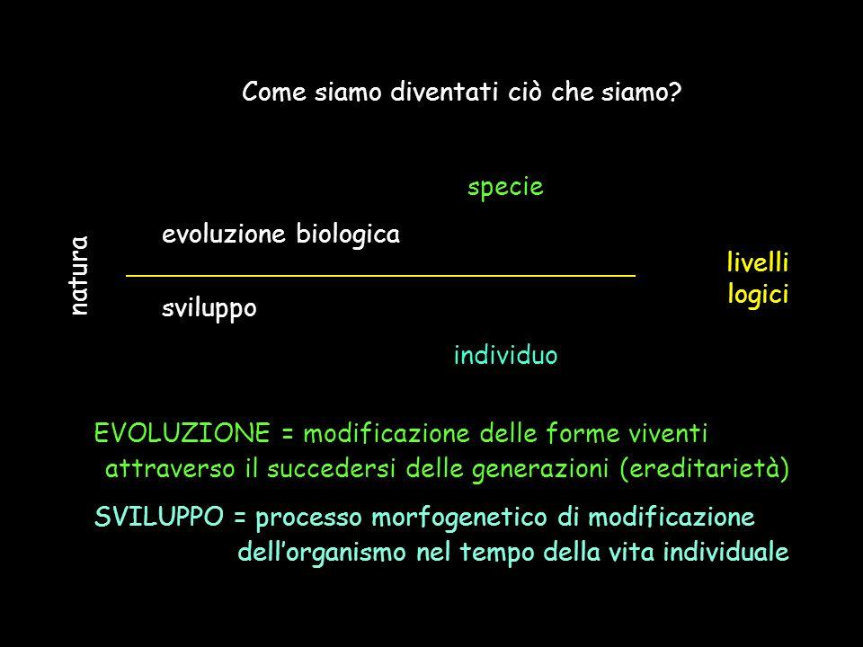 Come siamo diventati ciò che siamo? specie evoluzione biologica sviluppo individuo natura livelli logici EVOLUZIONE = modificazione delle forme vivent