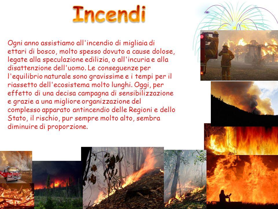 Ogni anno assistiamo all'incendio di migliaia di ettari di bosco, molto spesso dovuto a cause dolose, legate alla speculazione edilizia, o all'incuria