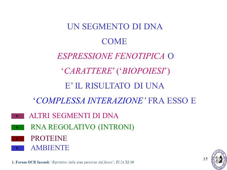 35 UN SEGMENTO DI DNA COME ESPRESSIONE FENOTIPICA O CARATTERE (BIOPOIESI) E IL RISULTATO DI UNA COMPLESSA INTERAZIONE FRA ESSO E ALTRI SEGMENTI DI DNA