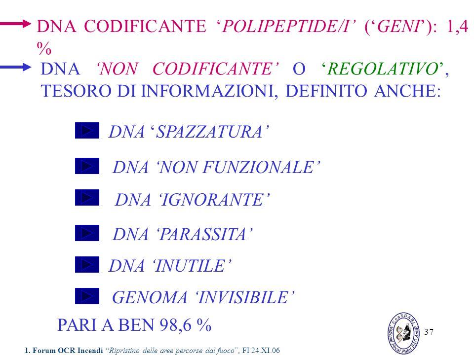 37 DNA NON CODIFICANTE O REGOLATIVO, TESORO DI INFORMAZIONI, DEFINITO ANCHE: DNA CODIFICANTE POLIPEPTIDE/I (GENI): 1,4 % DNA SPAZZATURA DNA NON FUNZIO