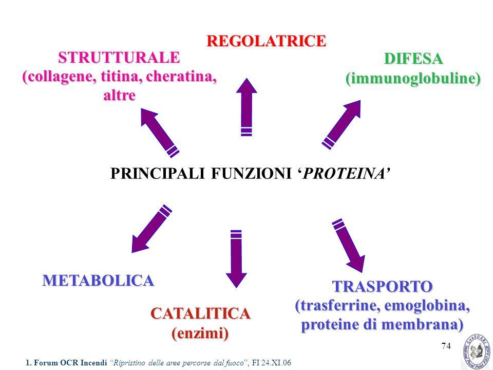 74 CATALITICA (enzimi) STRUTTURALE (collagene, titina, cheratina, altre STRUTTURALE (collagene, titina, cheratina, altre DIFESA (immunoglobuline) META