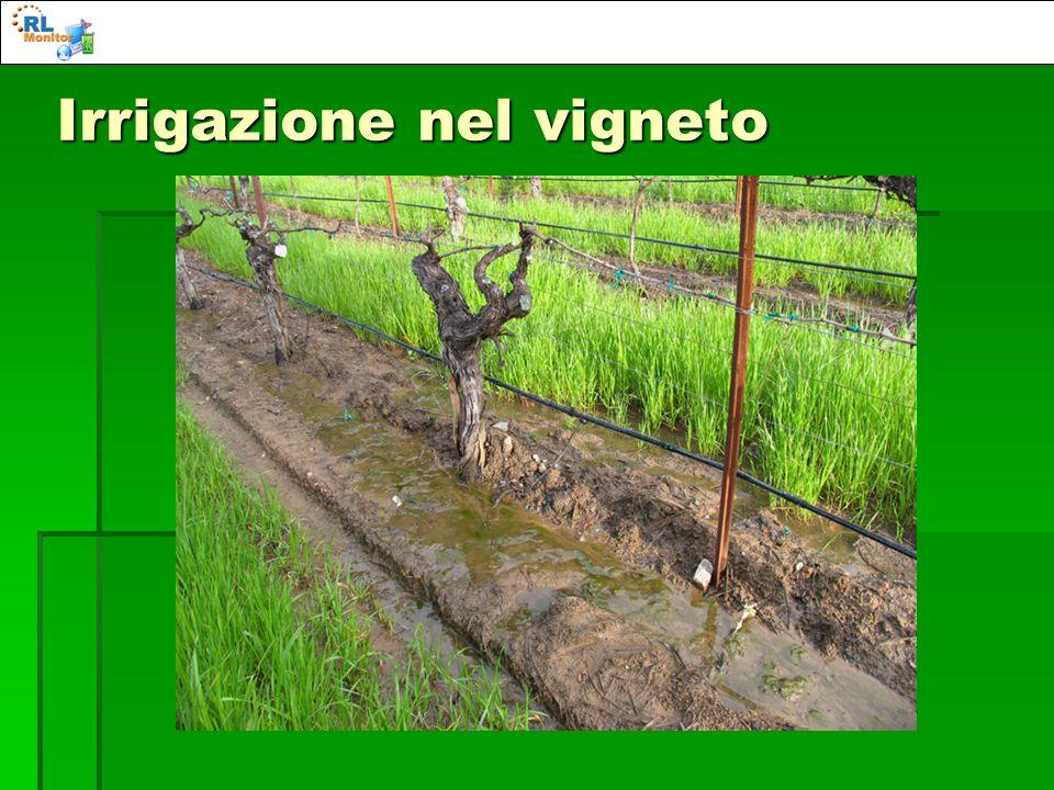 Irrigazione nel vigneto