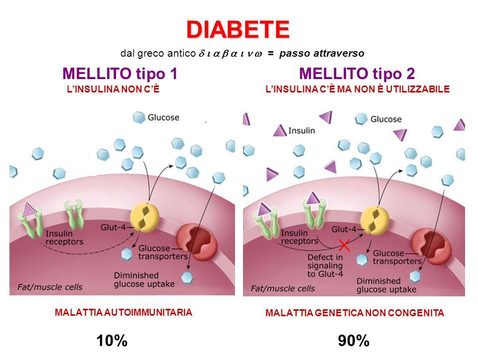 MELLITO tipo 1MELLITO tipo 2 10%90% MALATTIA AUTOIMMUNITARIA MALATTIA GENETICA NON CONGENITA LINSULINA NON CÈLINSULINA CÈ MA NON È UTILIZZABILE DIABET