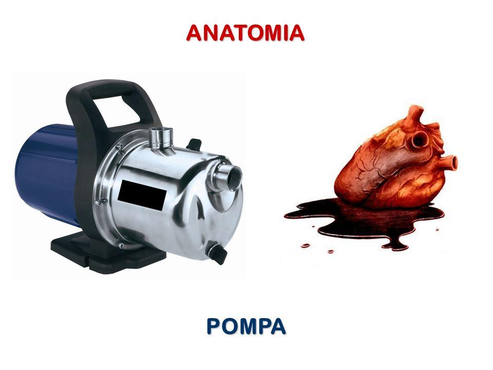 ANATOMIA POMPA