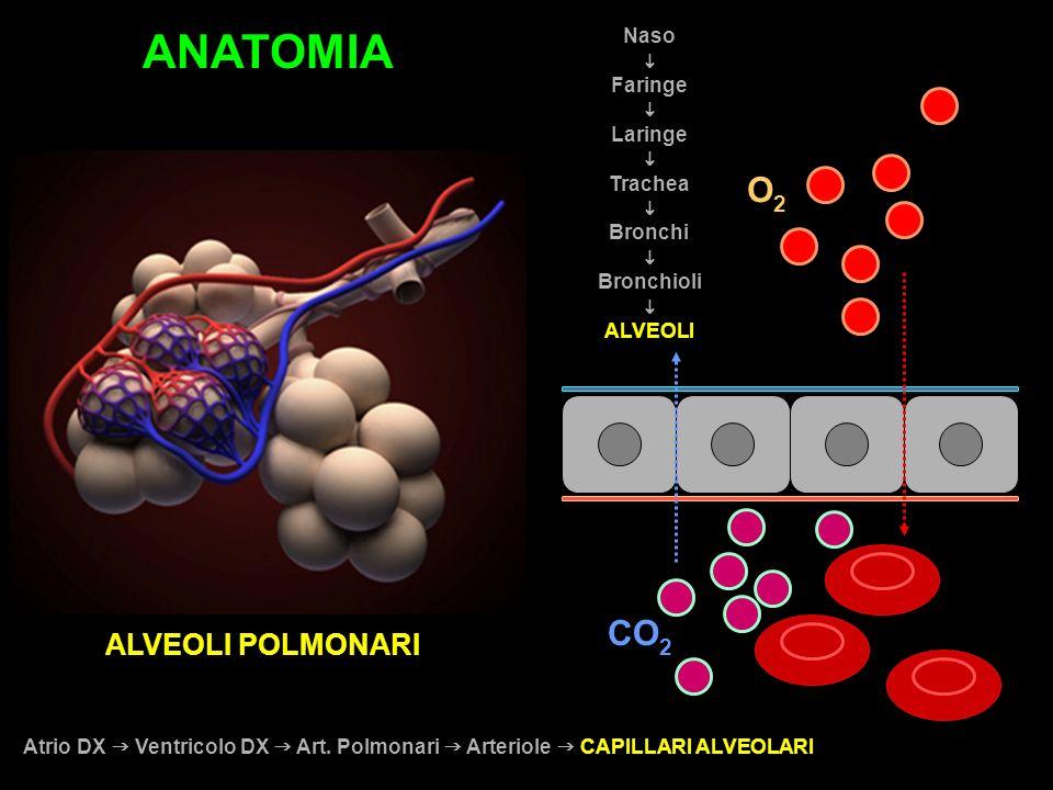 ALVEOLI POLMONARI Atrio DX Ventricolo DX Art. Polmonari Arteriole CAPILLARI ALVEOLARI O2O2 CO 2 Naso Faringe Laringe Trachea Bronchi Bronchioli ALVEOL