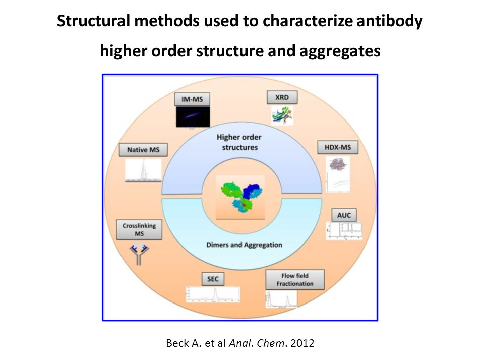 Structural methods used to characterize antibody higher order structure and aggregates Beck A.