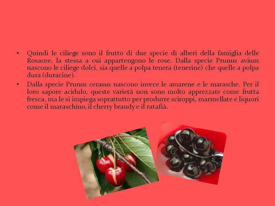 Quindi le ciliege sono il frutto di due specie di alberi della famiglia delle Rosacee, la stessa a cui appartengono le rose. Dalla specie Prunus avium