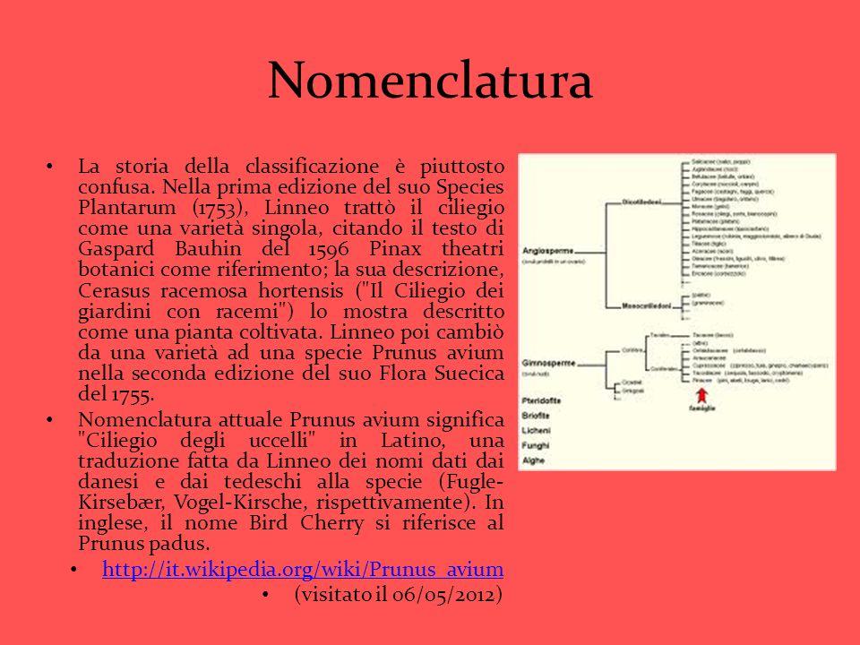 Nomenclatura La storia della classificazione è piuttosto confusa. Nella prima edizione del suo Species Plantarum (1753), Linneo trattò il ciliegio com