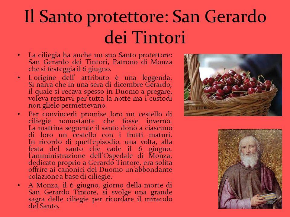 Il Santo protettore: San Gerardo dei Tintori La ciliegia ha anche un suo Santo protettore: San Gerardo dei Tintori, Patrono di Monza che si festeggia