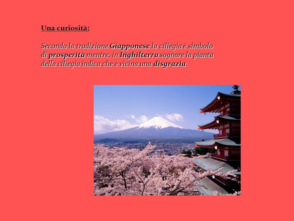 Una curiosità: Secondo la tradizione Giapponese la ciliegia è simbolo di prosperità mentre, in Inghilterra sognare la pianta della ciliegia indica che