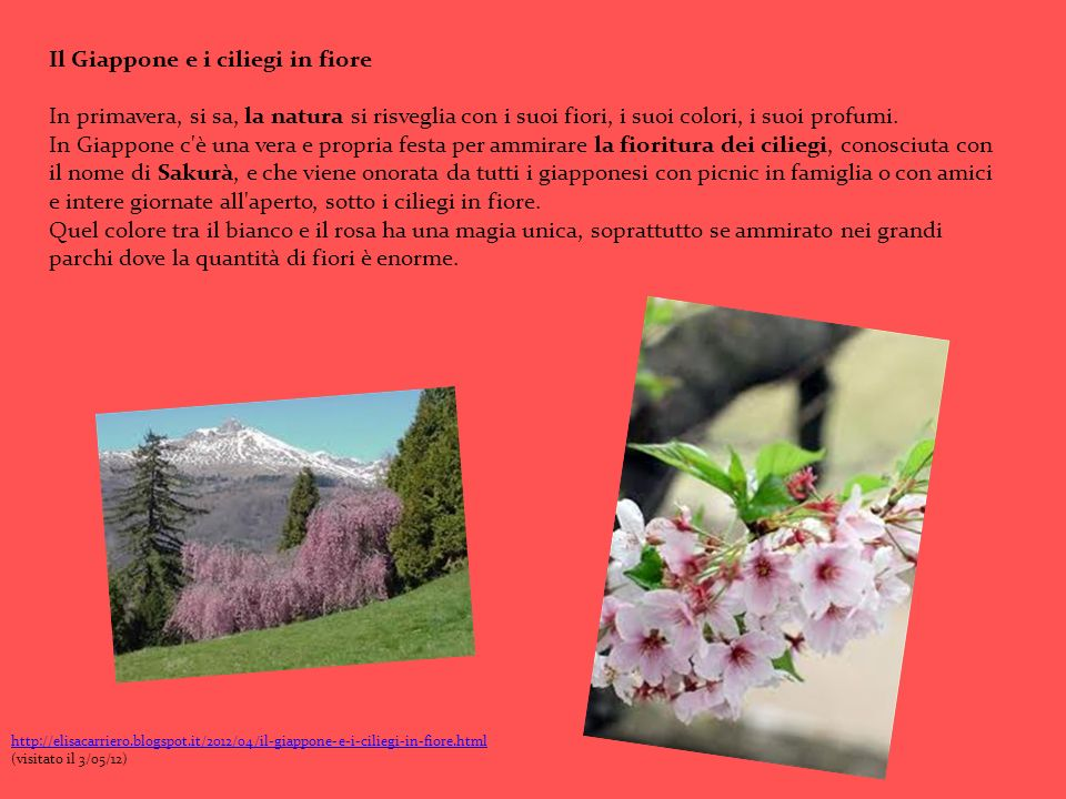 Il Giappone e i ciliegi in fiore In primavera, si sa, la natura si risveglia con i suoi fiori, i suoi colori, i suoi profumi. In Giappone c'è una vera