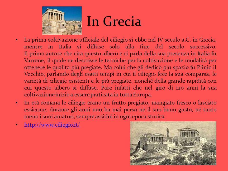In Grecia La prima coltivazione ufficiale del ciliegio si ebbe nel IV secolo a.C. in Grecia, mentre in Italia si diffuse solo alla fine del secolo suc