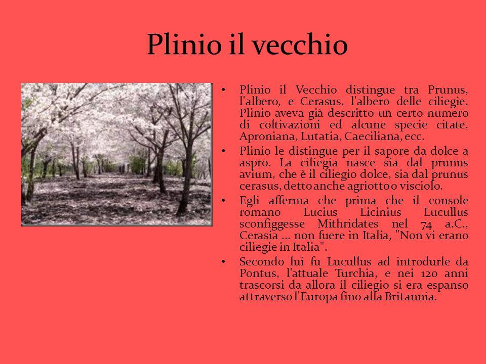 Plinio il vecchio Plinio il Vecchio distingue tra Prunus, l'albero, e Cerasus, l'albero delle ciliegie. Plinio aveva già descritto un certo numero di