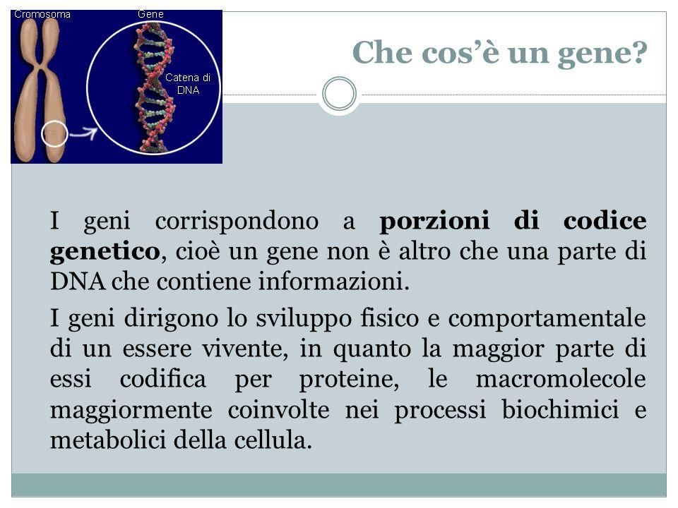 Che cosè un gene? I geni corrispondono a porzioni di codice genetico, cioè un gene non è altro che una parte di DNA che contiene informazioni. I geni