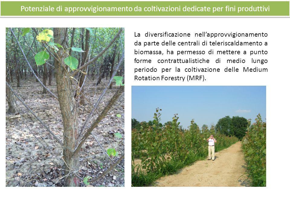 La diversificazione nellapprovvigionamento da parte delle centrali di teleriscaldamento a biomassa, ha permesso di mettere a punto forme contrattualistiche di medio lungo periodo per la coltivazione delle Medium Rotation Forestry (MRF).