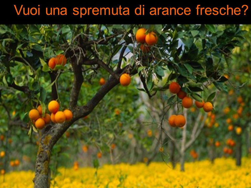 Vuoi una spremuta di arance fresche?