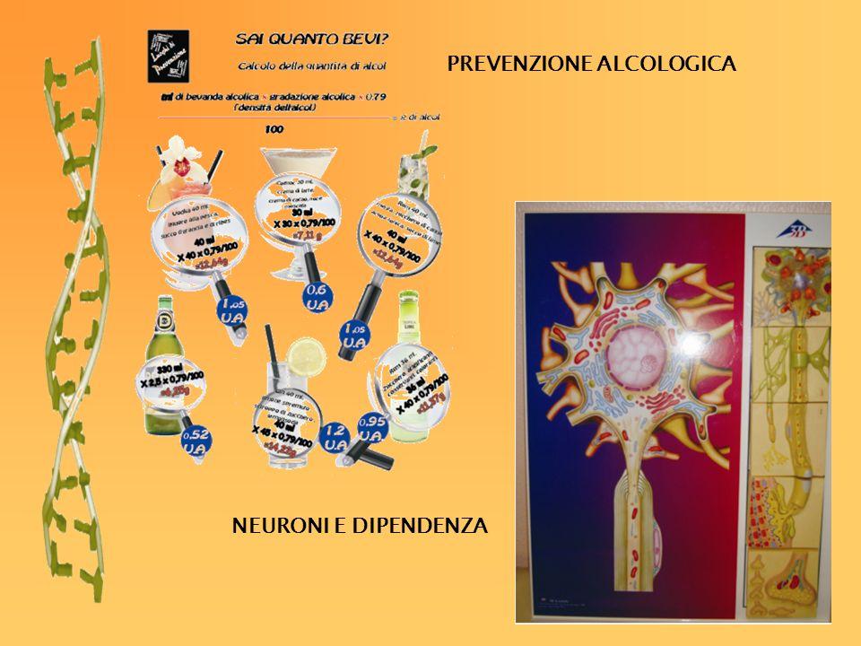 PREVENZIONE ALCOLOGICA NEURONI E DIPENDENZA