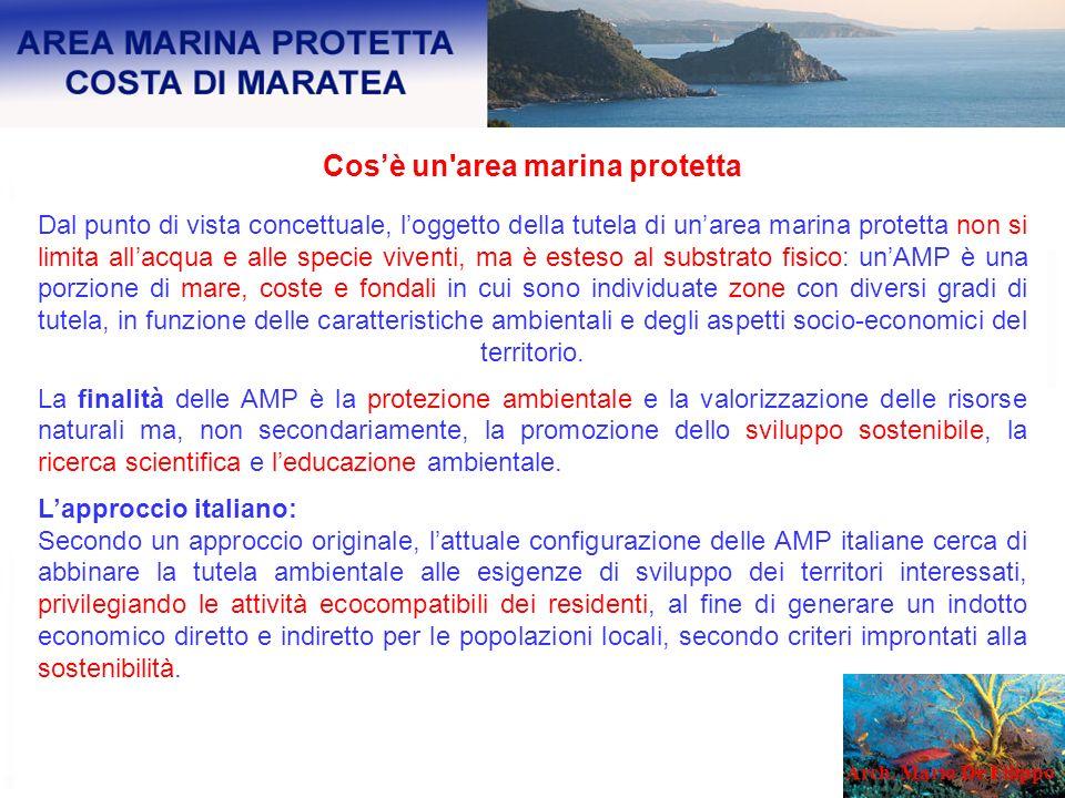 Cosè un'area marina protetta Dal punto di vista concettuale, loggetto della tutela di unarea marina protetta non si limita allacqua e alle specie vive