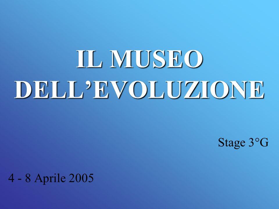IL MUSEO DELLEVOLUZIONE Stage 3°G 4 - 8 Aprile 2005