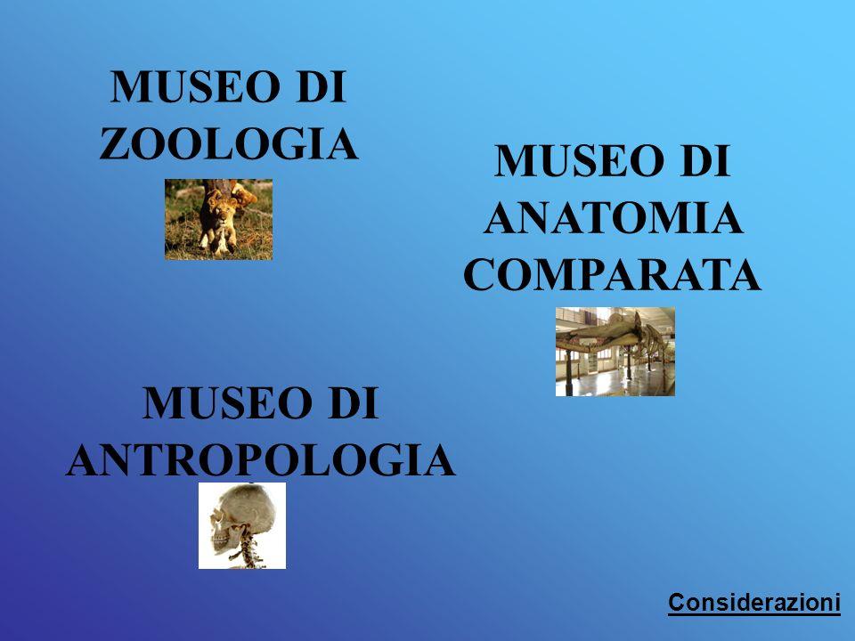 MUSEO DI ZOOLOGIA MUSEO DI ANATOMIA COMPARATA MUSEO DI ANTROPOLOGIA Considerazioni
