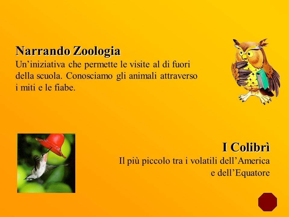 Narrando Zoologia Uniniziativa che permette le visite al di fuori della scuola. Conosciamo gli animali attraverso i miti e le fiabe. I Colibrì Il più