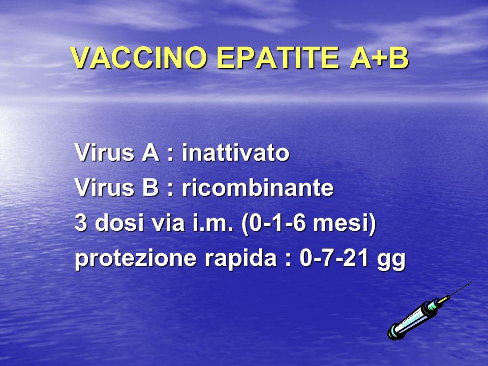 VACCINO EPATITE A+B Virus A : inattivato Virus B : ricombinante 3 dosi via i.m. (0-1-6 mesi) protezione rapida : 0-7-21 gg