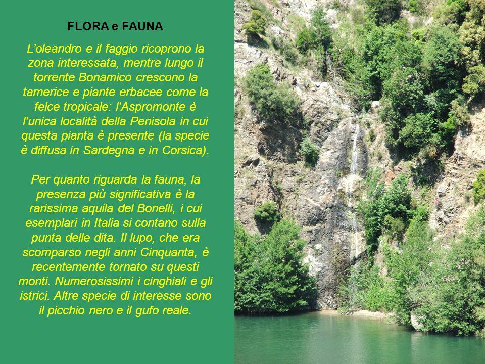 FLORA e FAUNA Loleandro e il faggio ricoprono la zona interessata, mentre lungo il torrente Bonamico crescono la tamerice e piante erbacee come la fel
