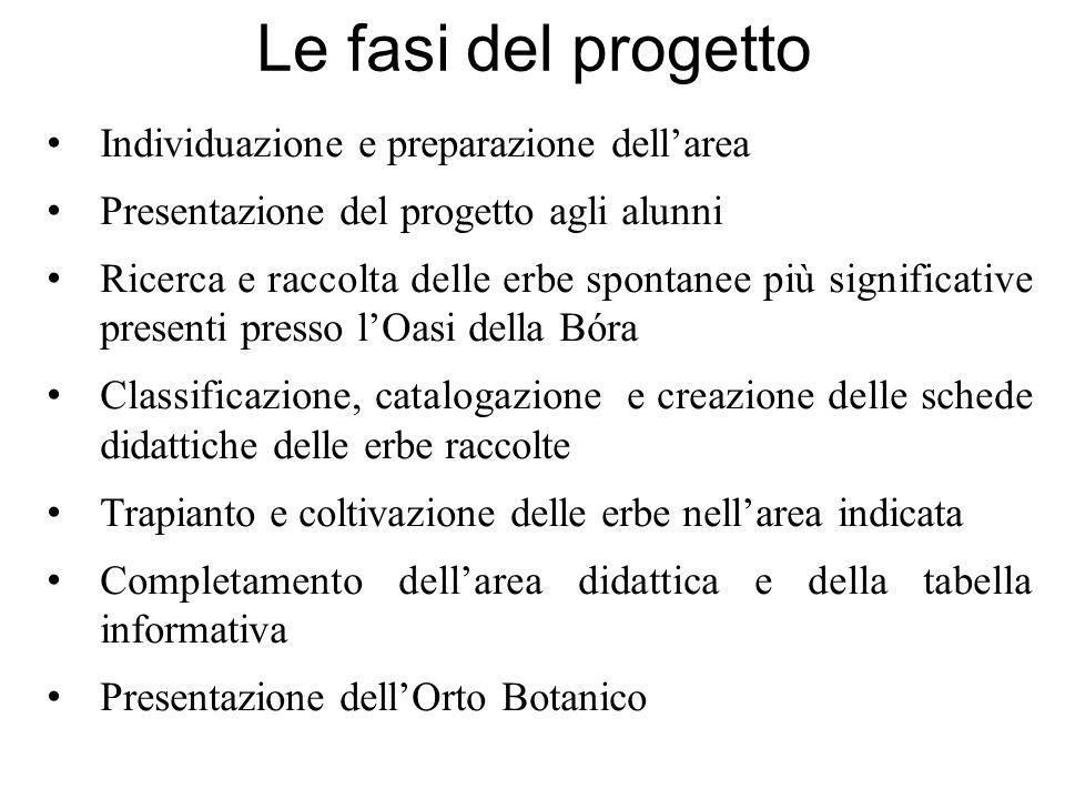 Le fasi del progetto Individuazione e preparazione dellarea Presentazione del progetto agli alunni Ricerca e raccolta delle erbe spontanee più signifi