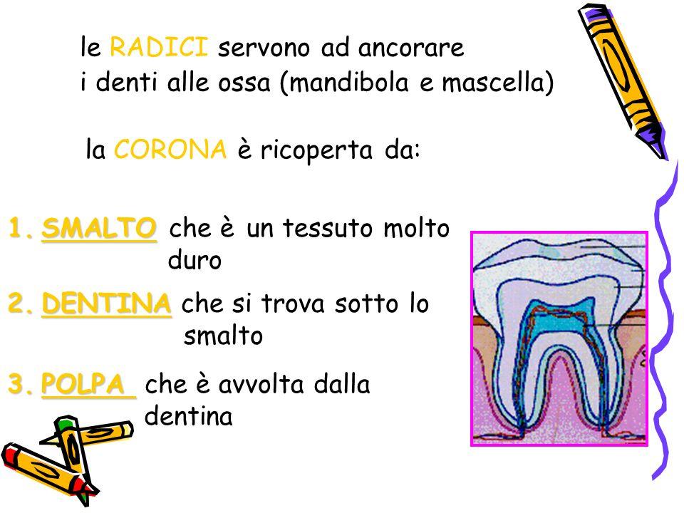 le RADICI servono ad ancorare i denti alle ossa (mandibola e mascella) la CORONA è ricoperta da: 1.SMALTO 1.SMALTO che è un tessuto molto duro 2.DENTINA 2.DENTINA che si trova sotto lo smalto 3.POLPA 3.POLPA che è avvolta dalla dentina