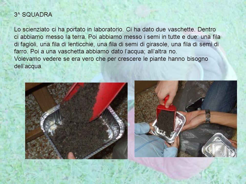 3^ SQUADRA Lo scienziato ci ha portato in laboratorio. Ci ha dato due vaschette. Dentro ci abbiamo messo Ia terra. Poi abbiamo messo i semi in tutte e