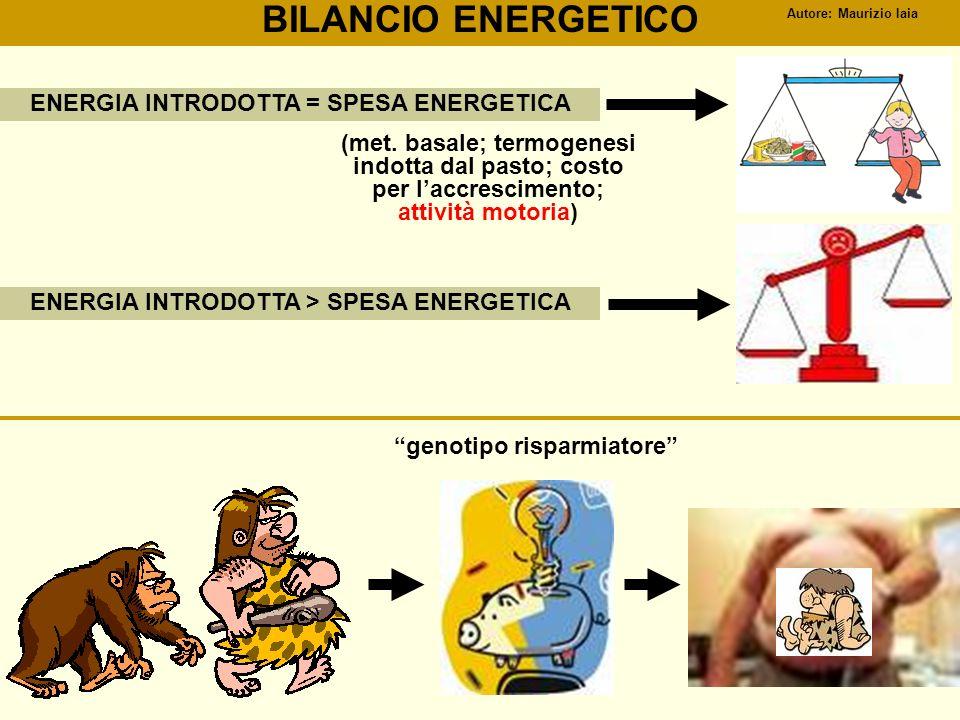 BILANCIO ENERGETICO ENERGIA INTRODOTTA = SPESA ENERGETICA ENERGIA INTRODOTTA > SPESA ENERGETICA (met. basale; termogenesi indotta dal pasto; costo per