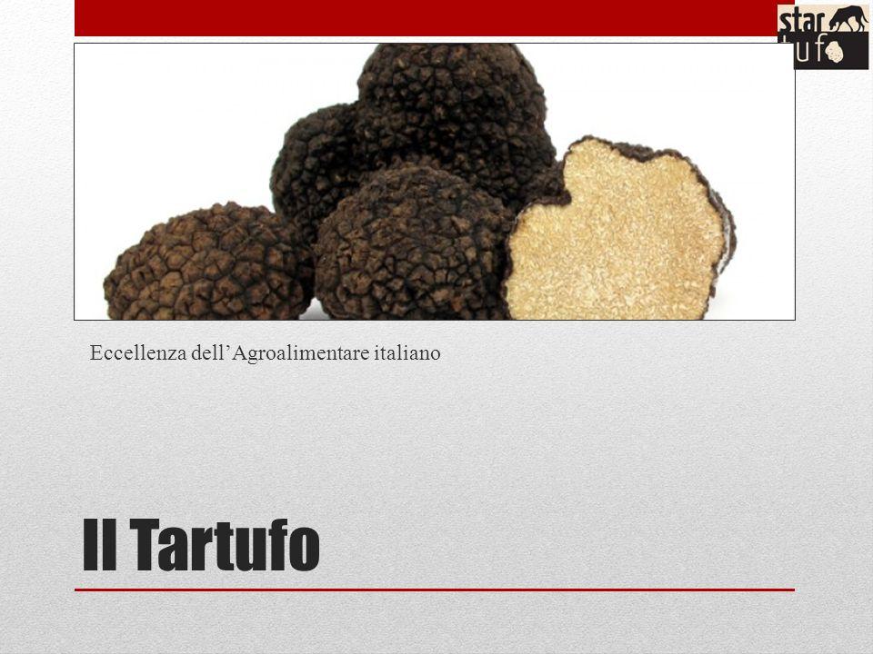 Il Tartufo Eccellenza dellAgroalimentare italiano
