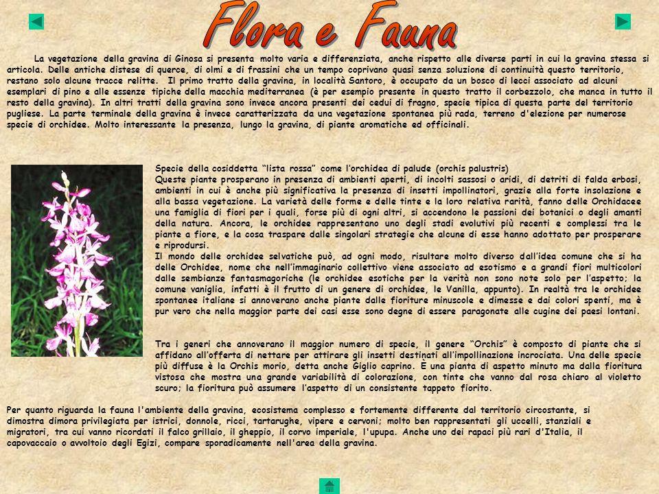 La vegetazione della gravina di Ginosa si presenta molto varia e differenziata, anche rispetto alle diverse parti in cui la gravina stessa si articola