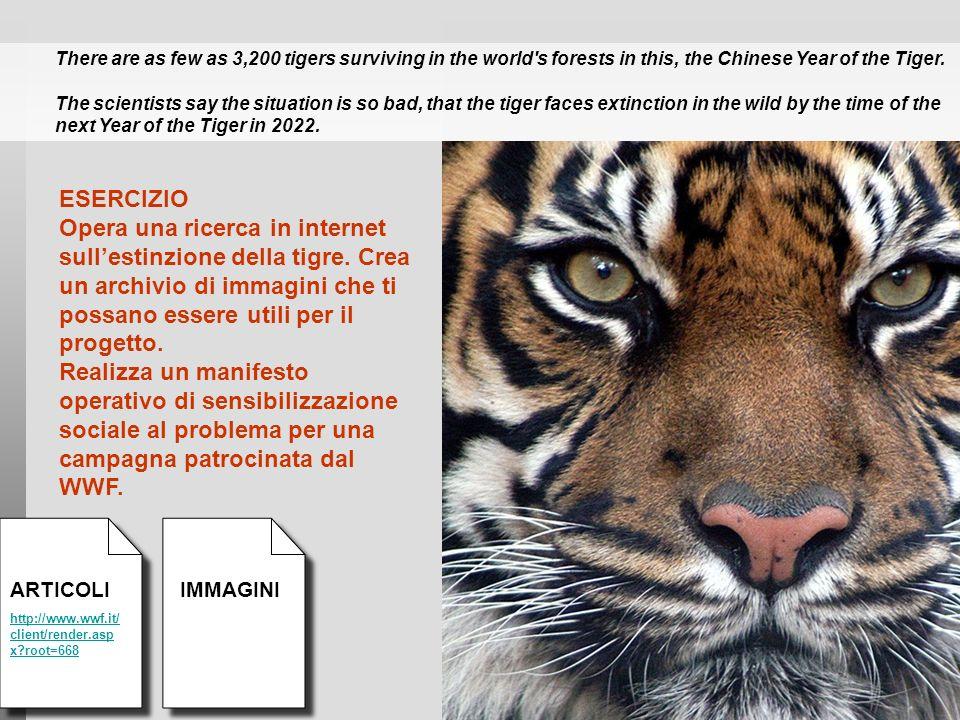 ESERCIZIO Opera una ricerca in internet sullestinzione della tigre. Crea un archivio di immagini che ti possano essere utili per il progetto. Realizza