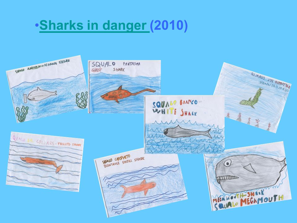 Sharks in danger (2010)Sharks in danger