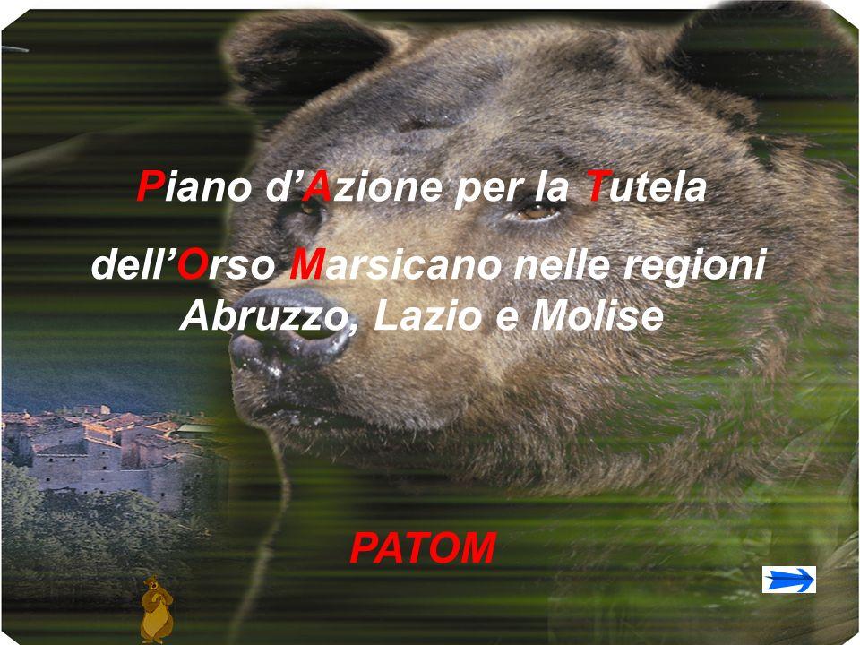 Piano dAzione per la Tutela dellOrso Marsicano nelle regioni Abruzzo, Lazio e Molise PATOM